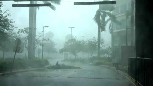 vídeos de stock, filmes e b-roll de powerful wind and rain lash naples florida as hurricane irma makes landfall - flórida eua