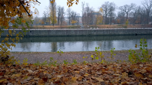prague vltava river and new town riverside in autumn - river vltava stock videos & royalty-free footage