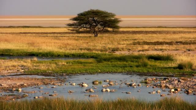 vidéos et rushes de prairie acacia plan d'eau - plan d'eau