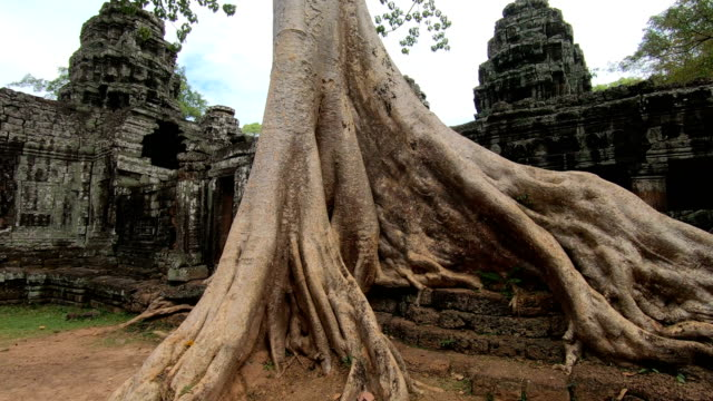 prasat ta prohm temple, in siem reap, cambodia - archaeology stock videos & royalty-free footage