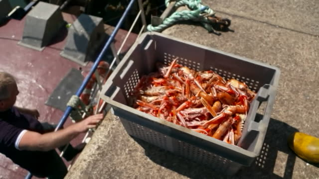 prawns caught by fishermen at peterhead port - recreational pursuit stock videos & royalty-free footage