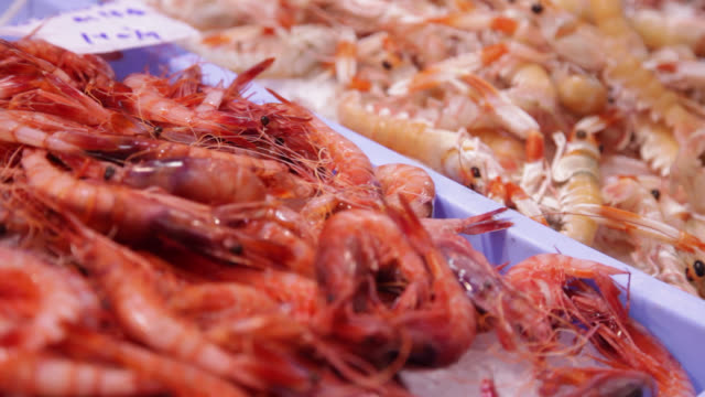 vídeos de stock e filmes b-roll de prawns on display at a fish market counter - marisco