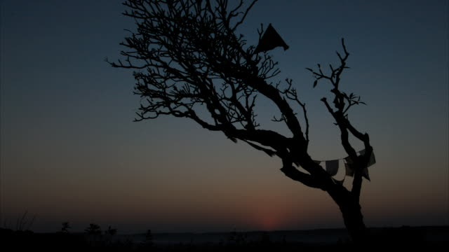 T/L prayer flags on tree, silhouetted at dawn, sunrise
