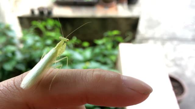 praying mantis - index finger stock videos & royalty-free footage