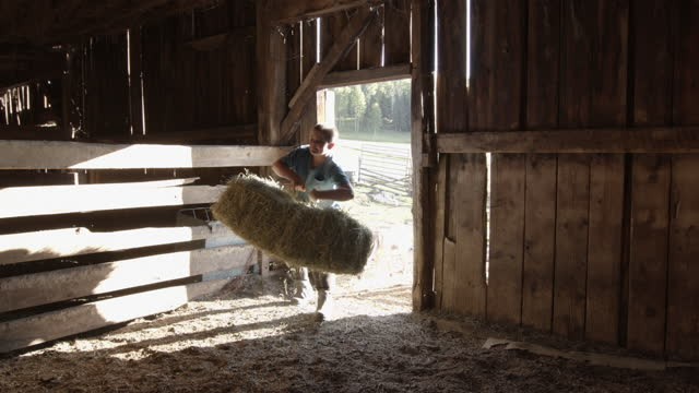 pre-adolescent boy carrying a large bale of hay into a stale in the barn to feed the sheep - sorghum stock videos & royalty-free footage