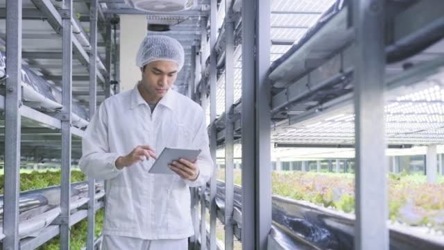vídeos y material grabado en eventos de stock de precisión agriculturalista monitoreo crecimiento de cultivos interiores - botánica