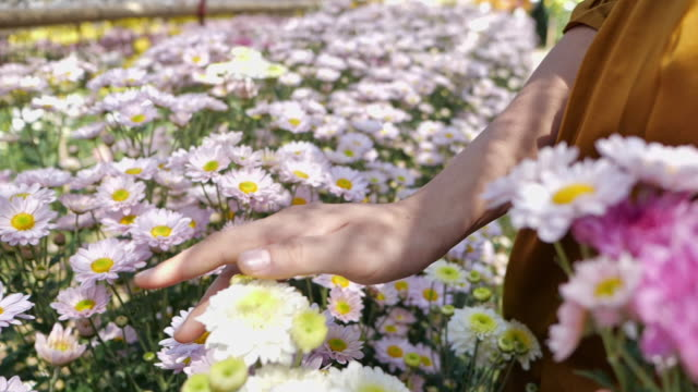 pregnant young woman enjoying the flower field - domestic garden stock videos & royalty-free footage