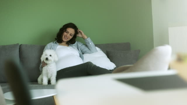 pregnant young woman with dog sitting on sofa at home - overweight dog stock videos & royalty-free footage