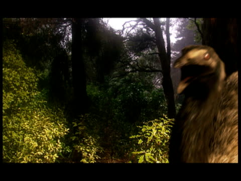prehistoric flightless birds forage and vocalize in a forest. - zoology stock videos & royalty-free footage