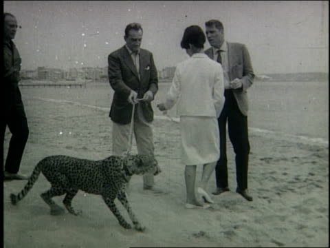 Premiere of film Il Gatopardo / stars Burt Lancaster and Marina Vlady both play with leopard on beach / awards presented to Marina Vlady and director...