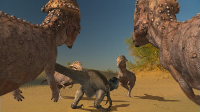 prenocephale surround a velociraptor. four hatchlings walk across the sand. - dinosaur stock videos & royalty-free footage