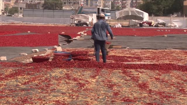 preparation process of isot pepper , also known as isot biber or urfa biber, in sanliurfa, turkey on august 13, 2016. isot is a type of chili pepper... - chilli pepper stock videos & royalty-free footage
