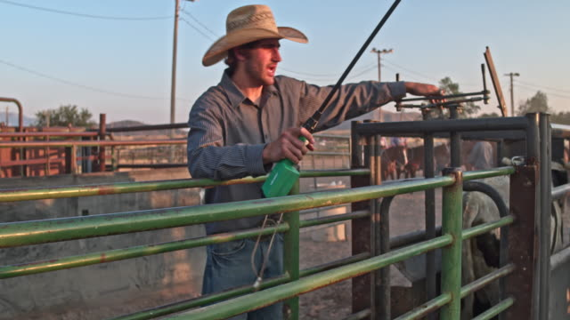 preparing cattle for the rodeo - cowboy ranch stock videos & royalty-free footage