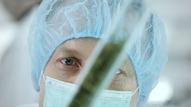 preparing medicine from marijuana. lab worker close up - seed stock videos & royalty-free footage