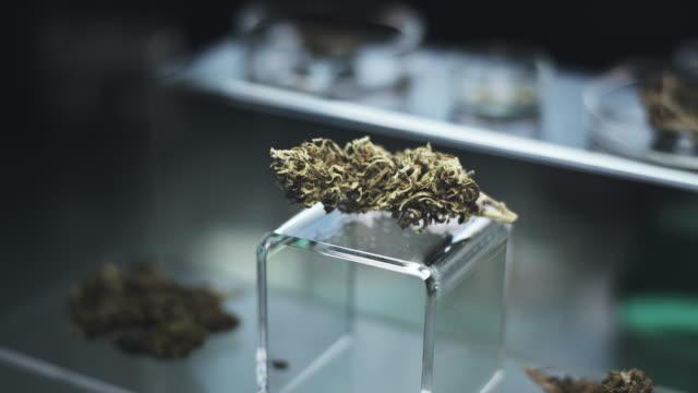 preparing medicine from marijuana. lab worker close up - medical sample stock videos & royalty-free footage