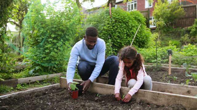 preparing new plants - gardening stock videos & royalty-free footage