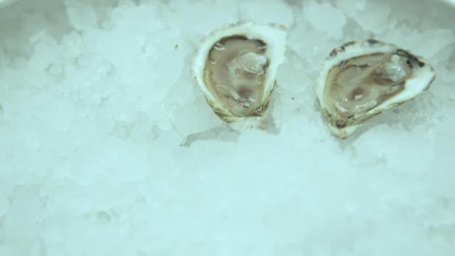 vídeos de stock e filmes b-roll de preparing oyster in restaurant - parte do corpo animal