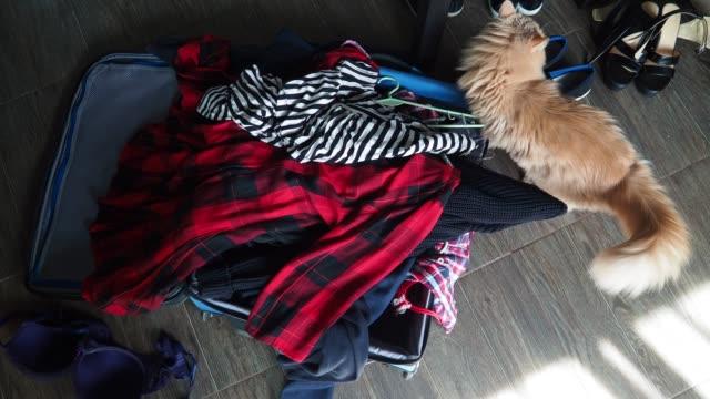 preparing suitcase - valigia video stock e b–roll