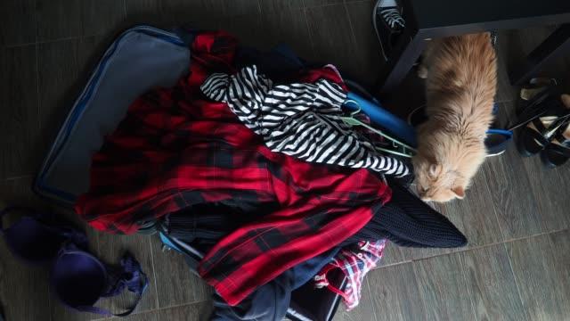 vídeos de stock e filmes b-roll de preparing suitcase - amontoar