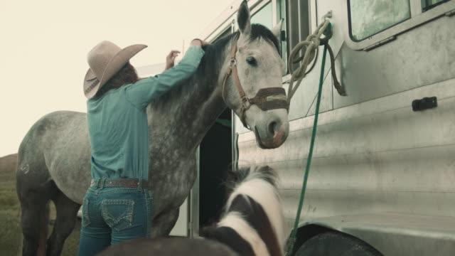 prepping horses in utah - jeans stock videos & royalty-free footage