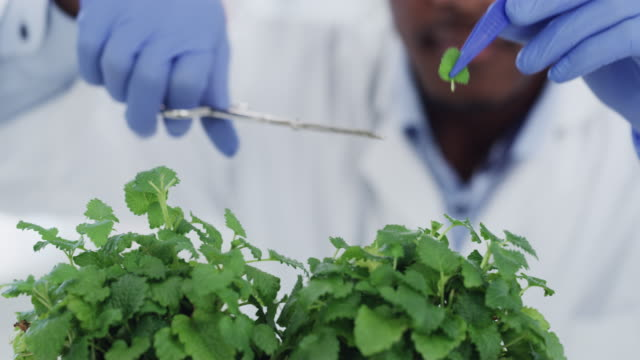 prepping the plants for tests - africa stock videos & royalty-free footage