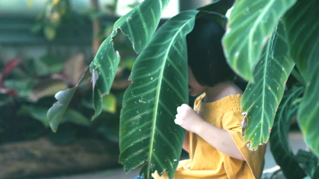 preschool age : exploring garden - preschool student stock videos and b-roll footage