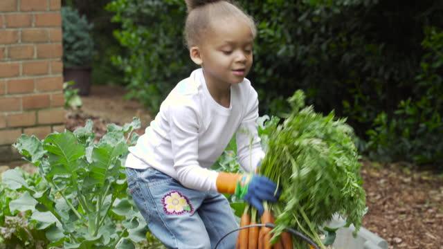 vidéos et rushes de preschooler in garden holding carrots - carotte