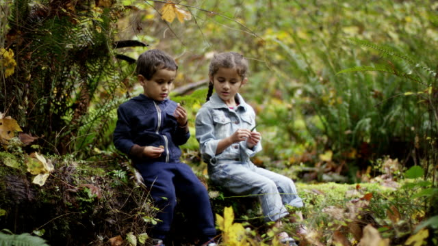 preschoolers exploring the woods - fatcamera stock videos and b-roll footage