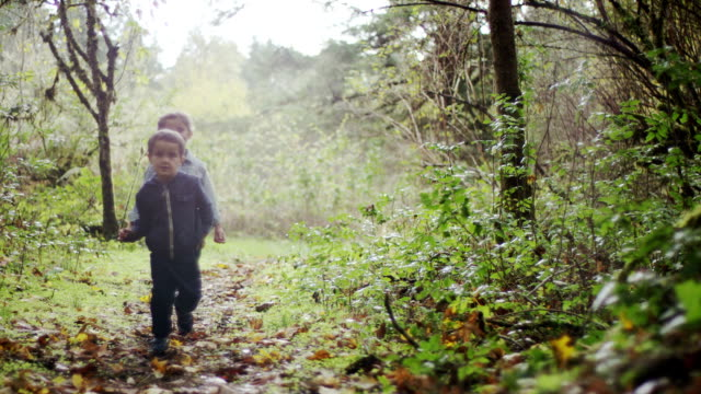 preschoolers exploring the woods - exploration stock videos and b-roll footage