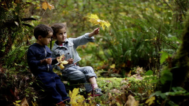 preschoolers exploring the woods - field trip stock videos & royalty-free footage