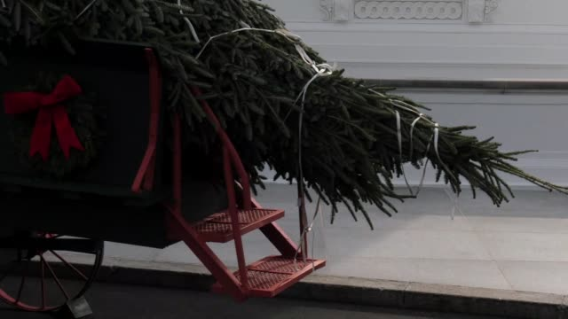 us president donald trump and first lady of the united states melania trump greet the white house christmas tree at the white house on november 19... - melania trump stock videos & royalty-free footage