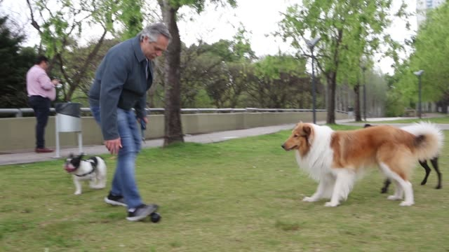 presidential candidate of frente de todos alberto fernandez walks his dog dylan prior to voting in puerto madero during the presidential elections in... - puerto madero stock videos & royalty-free footage