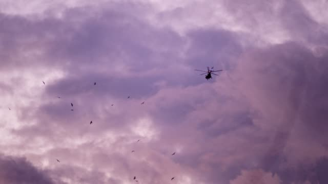 Press helicopter. Birds circulating above trees. Dusk