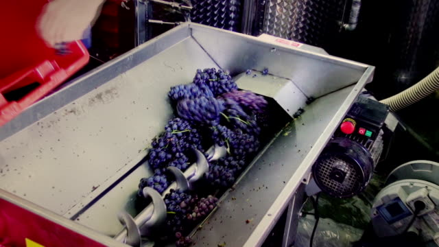 pressing machine - viniculture stock videos & royalty-free footage