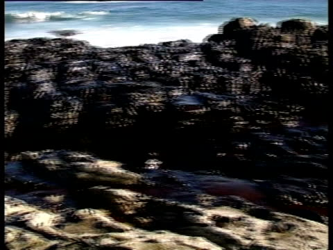 Prestige tanker Oil Spill, 2002: clean-up team scraping oil off rocks, Northwest coast of Spain.