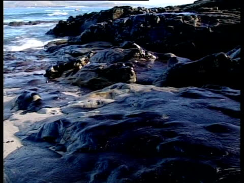 vídeos de stock, filmes e b-roll de prestige tanker oil spill, 2002: oil covered coastline, north-western spain. - vazamento de óleo