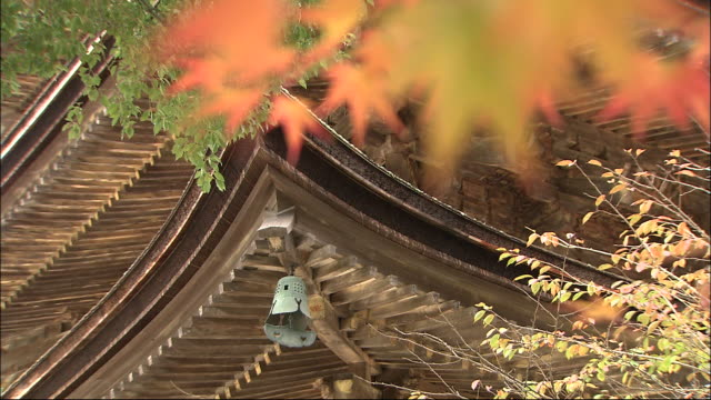 pretty autumn leaves frame a five-tiered pagoda. - pagoda stock videos & royalty-free footage