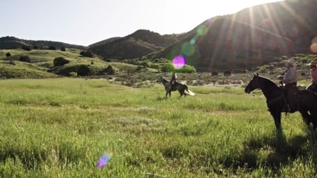 pretty cowgirl riding horseback in a high country meadow - cowgirl stock videos & royalty-free footage