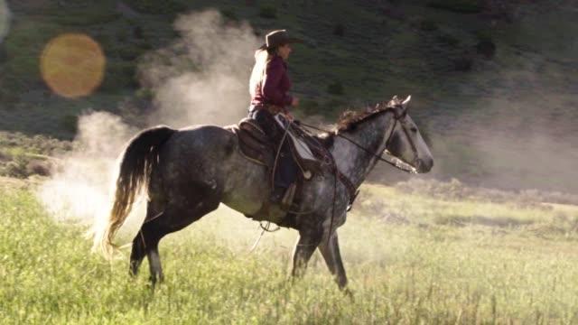 vídeos de stock, filmes e b-roll de linda cowgirl montando a cavalo em um prado de terras altas - cavalo família do cavalo