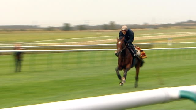 racing preview of horse racing legend frankel's last race england newmarket ext top racehorse frankel galloping along racecourse during training... - newmarket suffolk england stock videos and b-roll footage