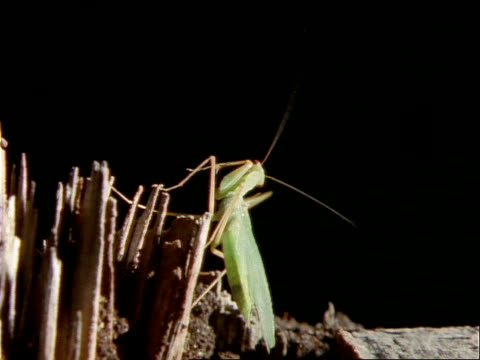 stockvideo's en b-roll-footage met a preying mantis crawls on a chunk of wood. - ongewerveld dier