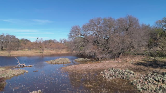 prickly pear cacti flooded after strong rains in the arid savanna region in the wild in texas, usa. aerial drone video with the ascending camera motion. - prickly pear cactus stock videos & royalty-free footage