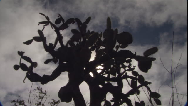 a prickly pear cactus stands in silhouette against dark clouds. - cactus silhouette stock videos & royalty-free footage