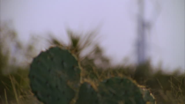 slo mo ms tu r/f prickly pears cactus and wind turbines against blue sky / junction, texas, usa - prickly pear cactus stock videos & royalty-free footage