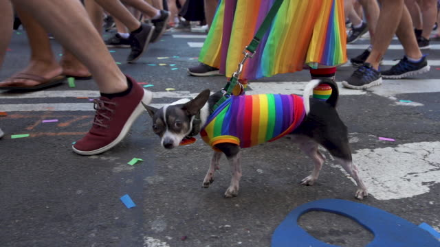 pride dog at pride march - worldpride nyc 2019 on june 30, 2019 in new york city. - ブランド名点の映像素材/bロール
