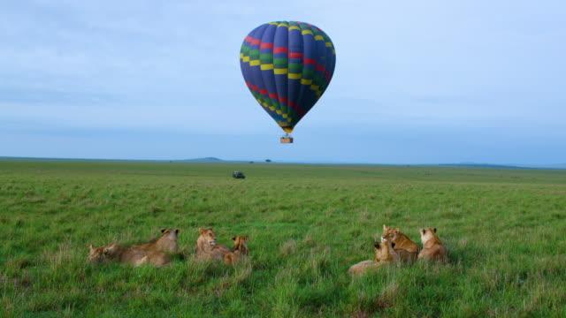 Pride Of Lions & Hot Air Balloon Maasai Mara, Kenya, Africa