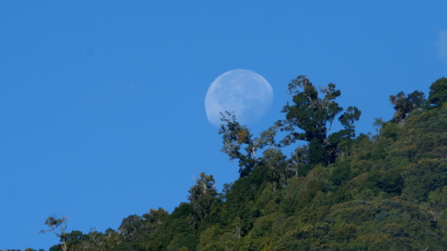 primary rainforest, with full moon in daylight - full moon stock videos & royalty-free footage