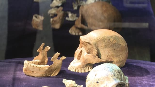 stockvideo's en b-roll-footage met primitive hominids may have lived in africa at the same time as humans researchers say in new findings that could change the understanding of human... - geproduceerd segment