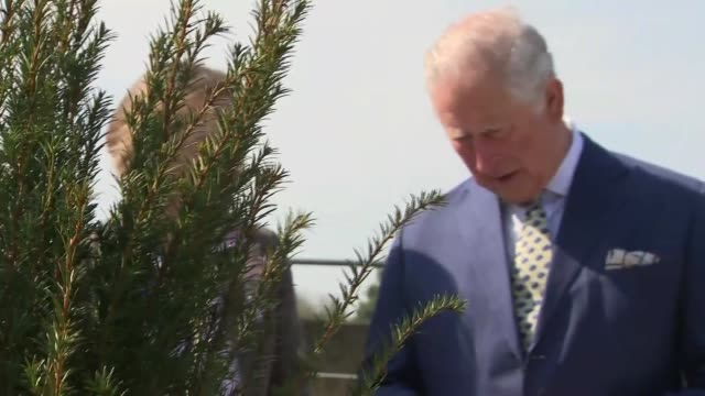 prince charles and camilla tour the gardens during visit to refurbished hillsborough castle; northern ireland: county down: hillsborough castle: ext... - ulster county stock videos & royalty-free footage