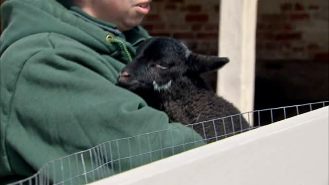 prince charles and camilla visit george washington's mount vernon tracking shots along to farm / lamb being held by worker / charles and camilla... - george washington stock videos and b-roll footage